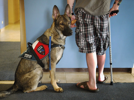 Veterans and Dogs