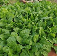 Gemüsegarten3.jpg