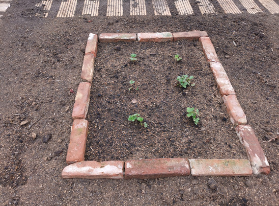 Was zum naschen für die Gartenarbeit zwi