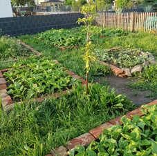 Gemüsegarten.jpg