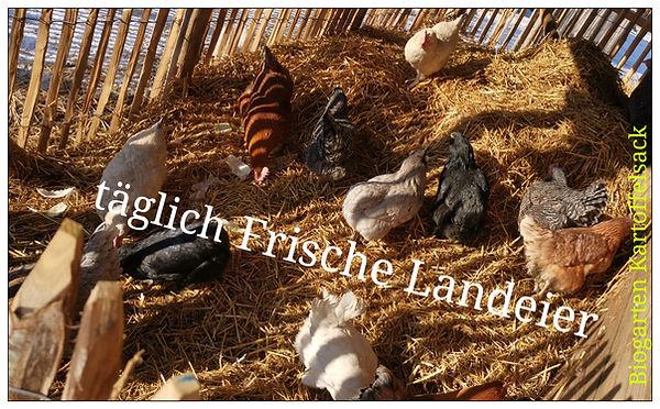 Eier Biogarten Kartoffelsack.jpg