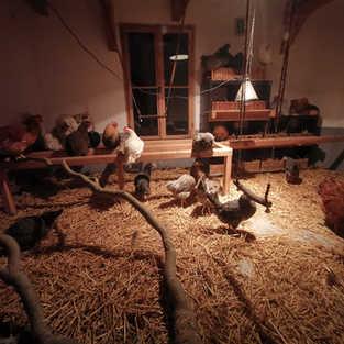 Hühnerhausromantik2.jpg