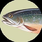 Fish Circle.png