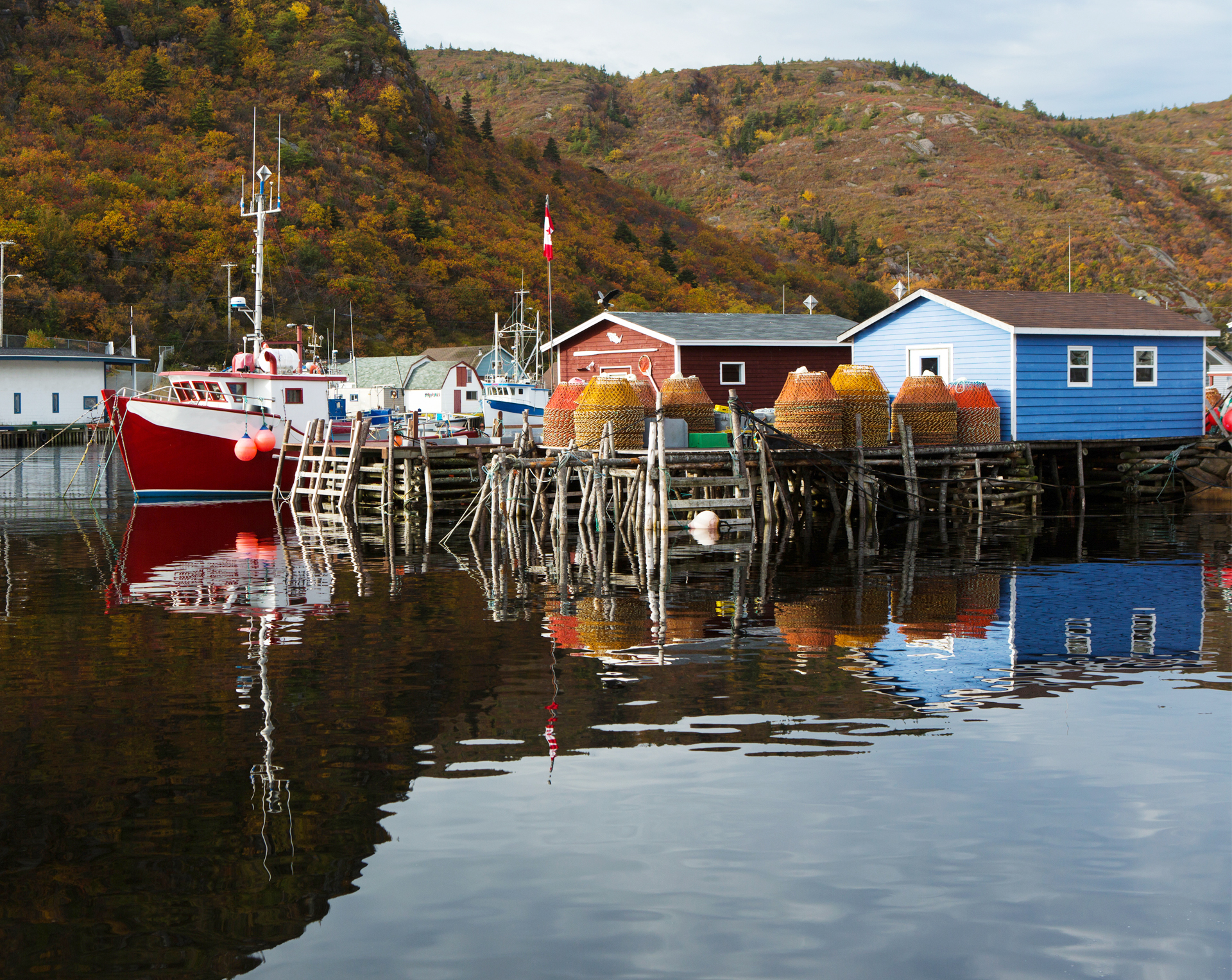 Colorful Fishery Strip