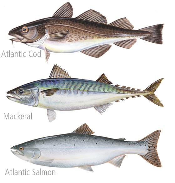 Fish Paintings 2 FB.jpg