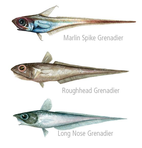 Fish Paintings 4 FB.jpg
