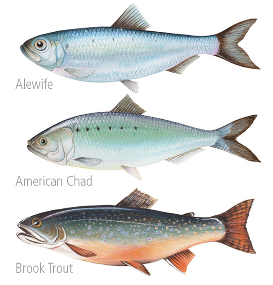 Fish Paintings 1 FB.jpg