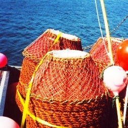 crab pots - crop for web16