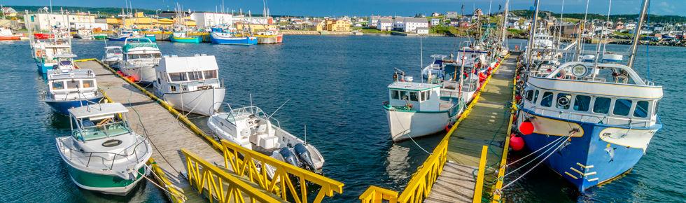 Many docked fishing vessels