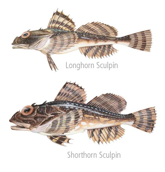 Fish Paintings 3 FB.jpg
