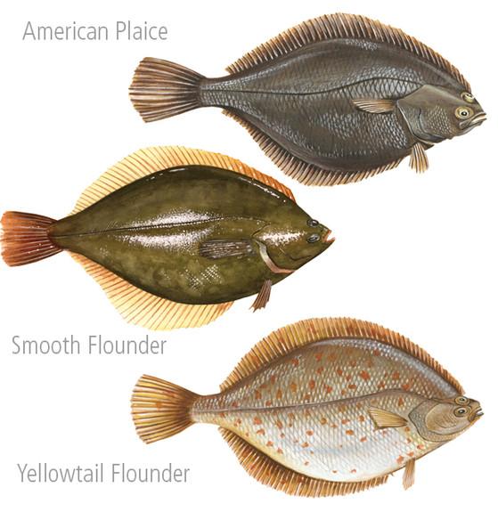 Fish Paintings 5 FB.jpg