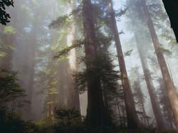 In These Quiet Woods