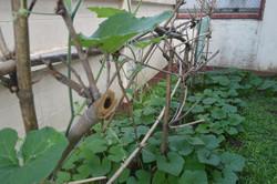 Promise Home Garden