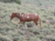 She lost the foal around 4-28-2015 and t