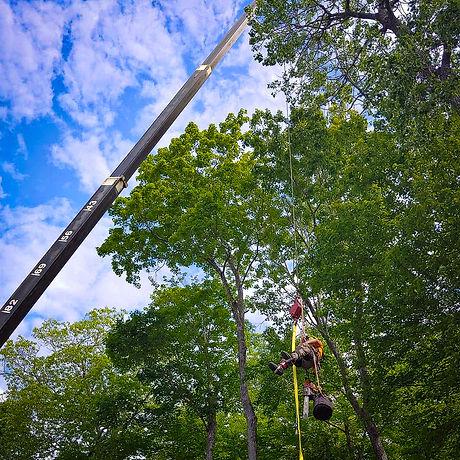 Belanger Tree Care-7.jpg