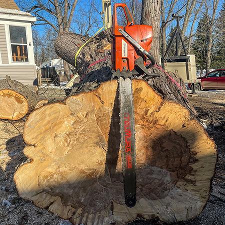 Belanger Tree Care-12.jpg