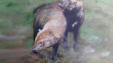 El Perro De Monte:  Una especie registrada en Gualaquiza