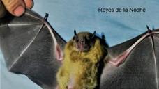 Murciélagos del bosque medicinal