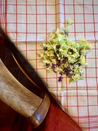 Cueillette de petites violettes odorantes et primevères. Les premières sont destinées aux infusions de l'année et les deuxièmes agrémenteront un macérât huileux.