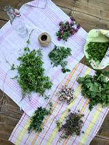 Les plantes une fois triées, sauriez-vous les reconnaître?
