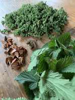 Cueillette sauvage du jour, fleurs d'ortie, faînes et feuilles d'ortie, de quoi préparer un délicieux pesto de la forêt.