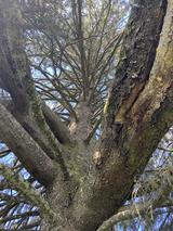 Adossée à cet arbre majestueux, comme un câlin apaisant écorce-peau.