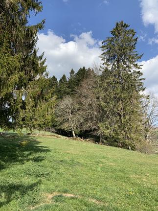 La beauté des Franches-Montagnes, de leurs pâturages au réveil de la nature