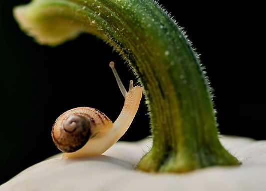Il lento mondo delle Chiocciole