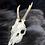 Thumbnail: Roe Deer