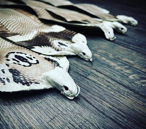 Monocled Cobra CITES ll