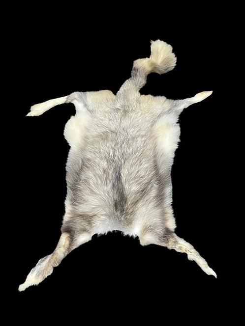 Marble Fox - flat skin
