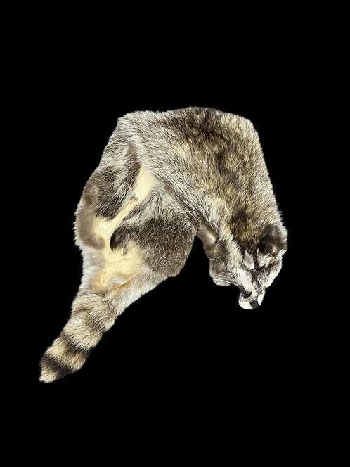Racoon pelt