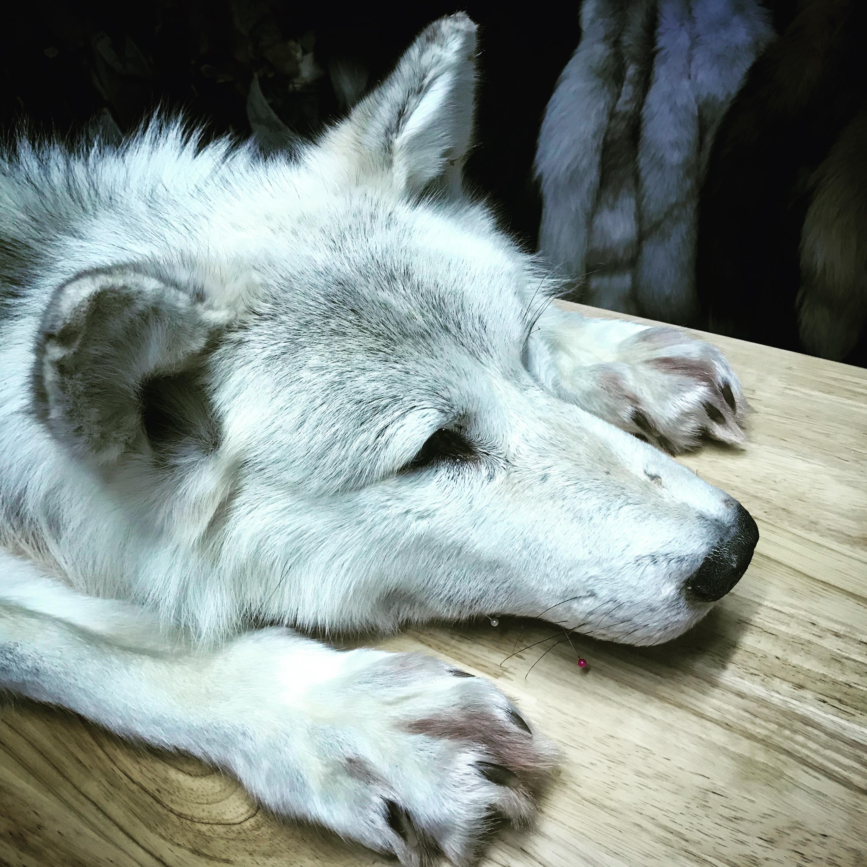 Wolf soft mount
