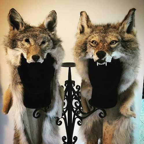 Snarling coyote headdress