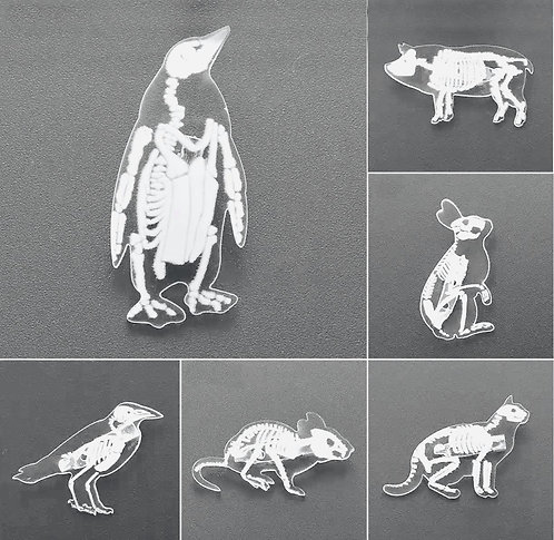 Anatomy Animal Pins