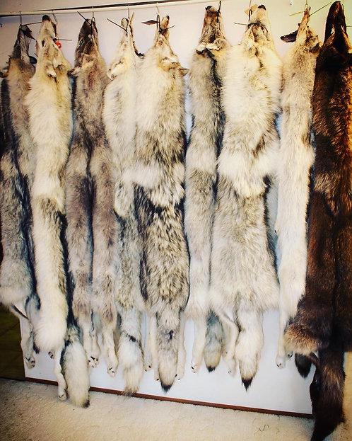 Genuine wolf pelt
