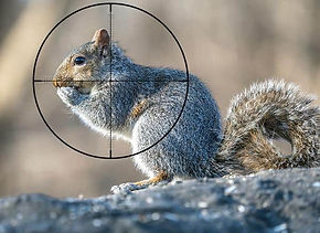 Whats-the-Best-Scope-for-22lr-Squirrel-Hunting.jpeg