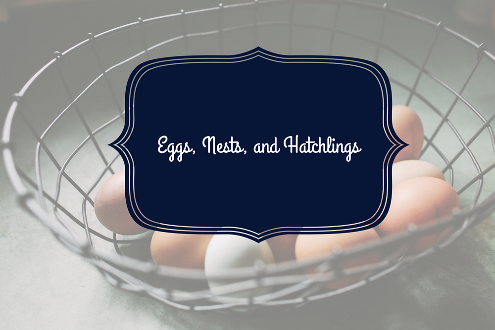 Eggs, Nests, and Hatchlings Study