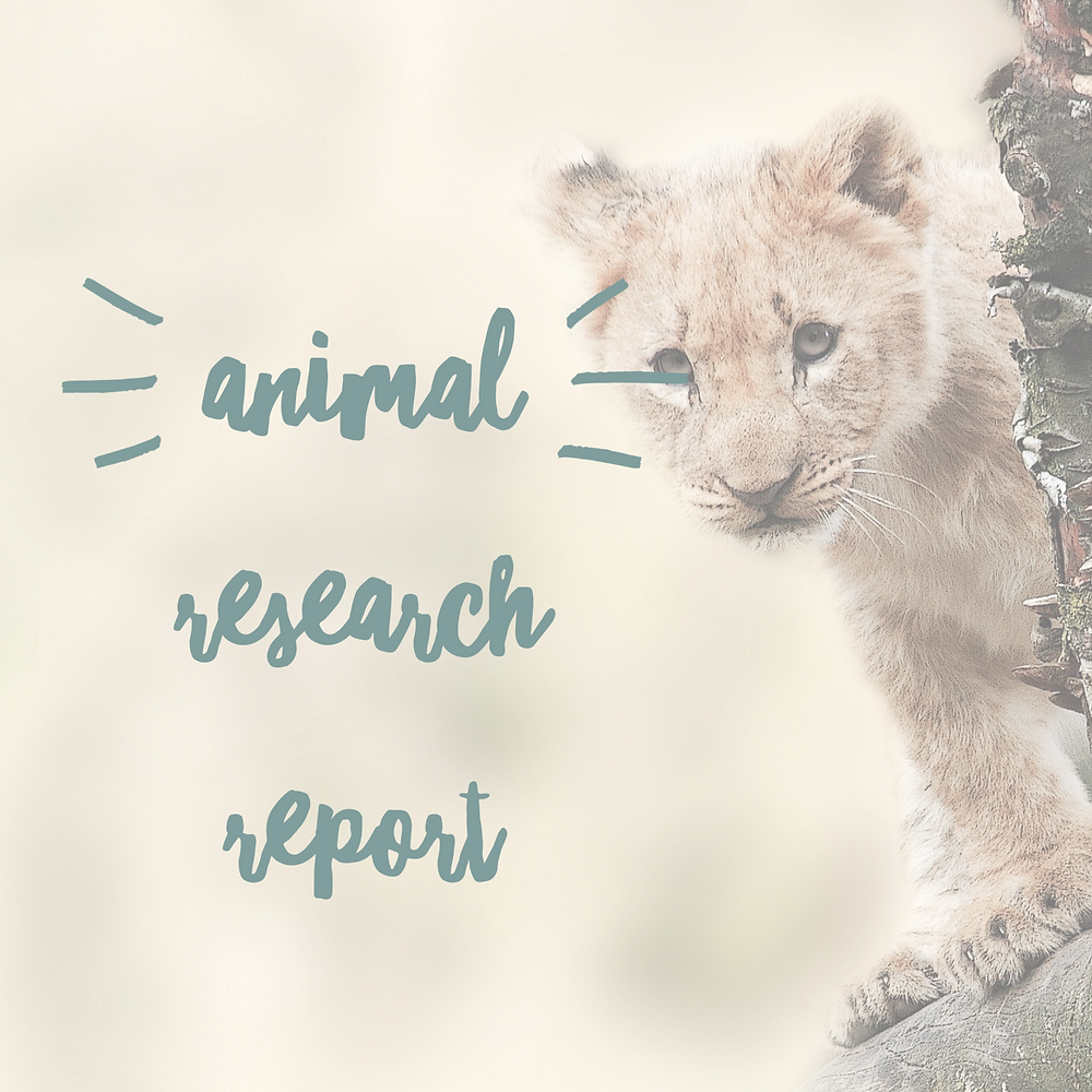 Animal Research Report kindergarten, first, second grade