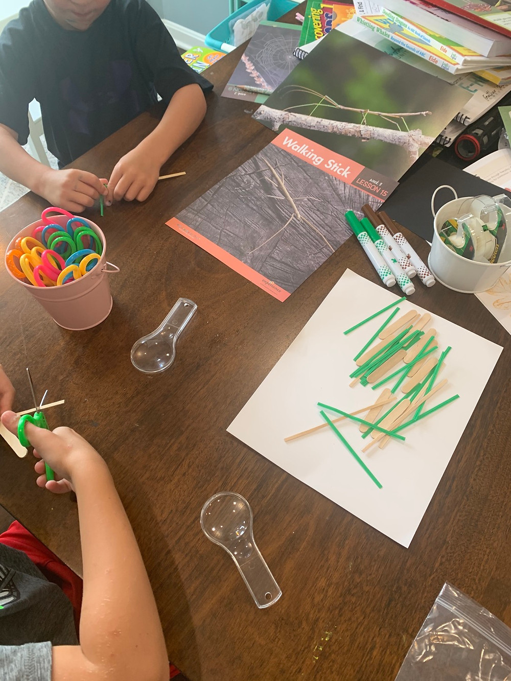 Elementary science curriculum and crafts