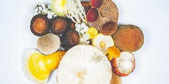 type of mushrooms.jpg