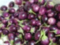 pickle eggplants 1.jpg