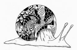 snail pattern.png