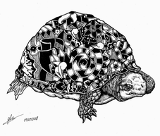turtle pattern original.png