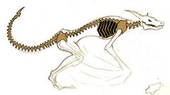spine design.png