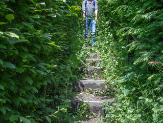 Von steilen Wegen und wilden Tieren