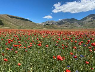 Blütenzauber und kalter Bergsee