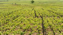 Burgund  (2 von 12)
