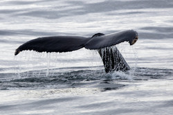 antartica jpg1920-415