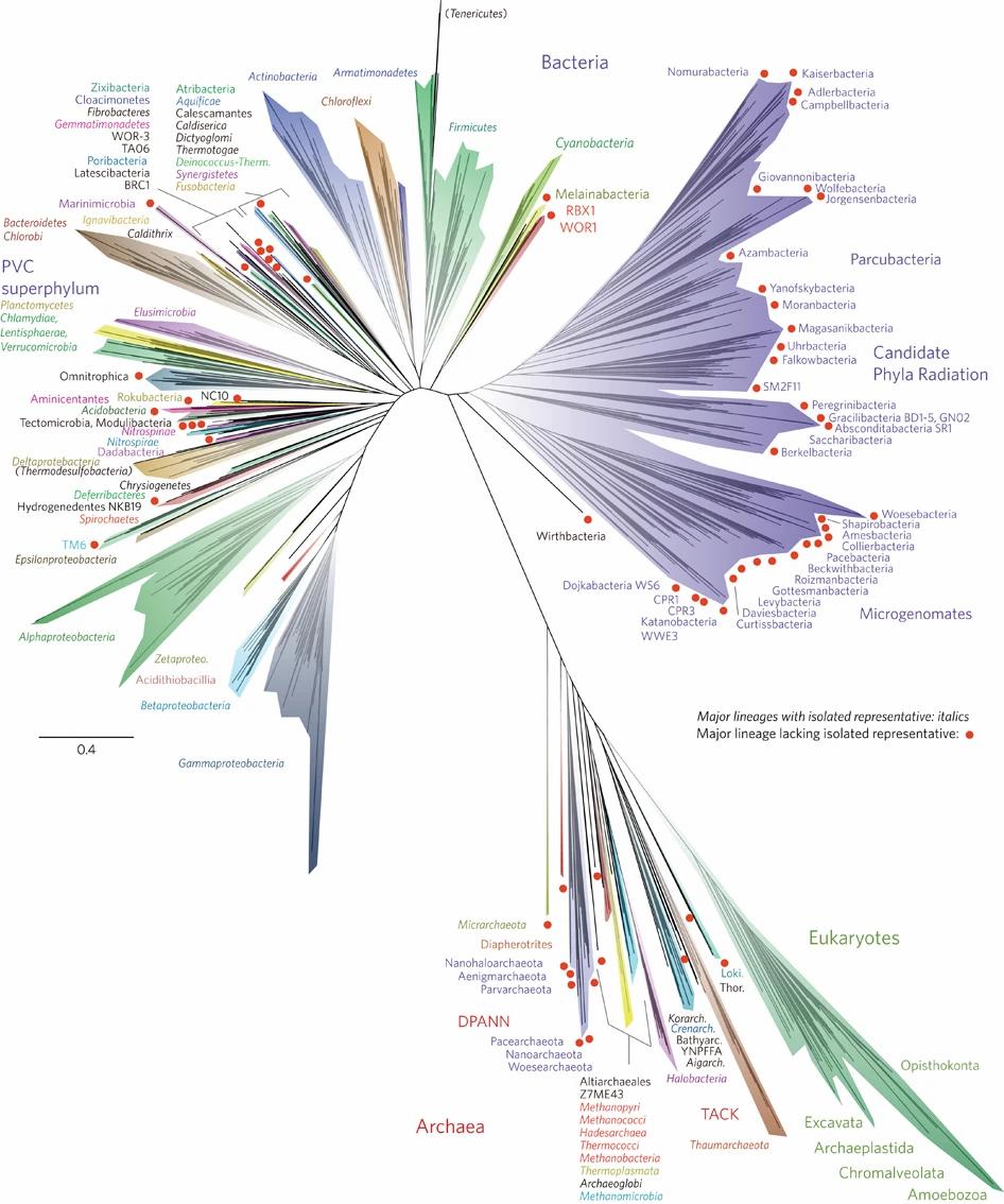 Filogenetsko stablo, izvor: Hug, L., Baker, B., Anantharaman, K. et al. A new view of the tree of life. Nat Microbiol 1